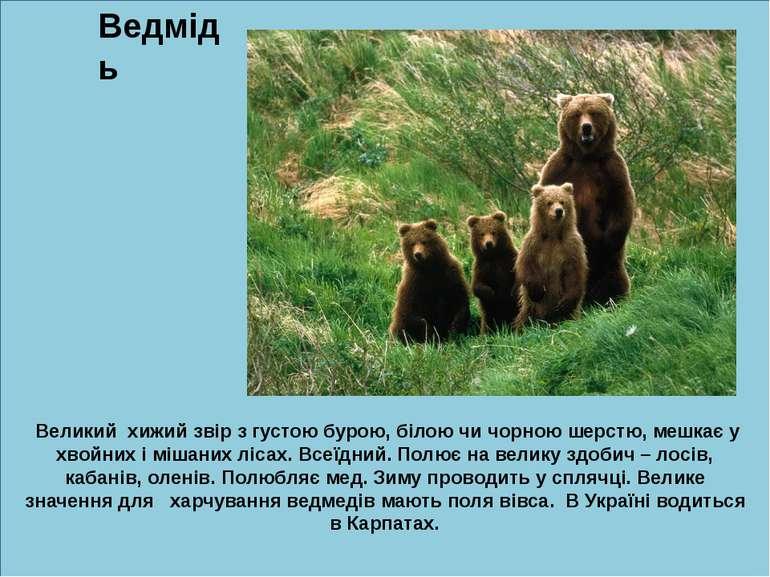 б Ведмідь Великий хижий звір з густою бурою, білою чи чорною шерстю, мешкає у...