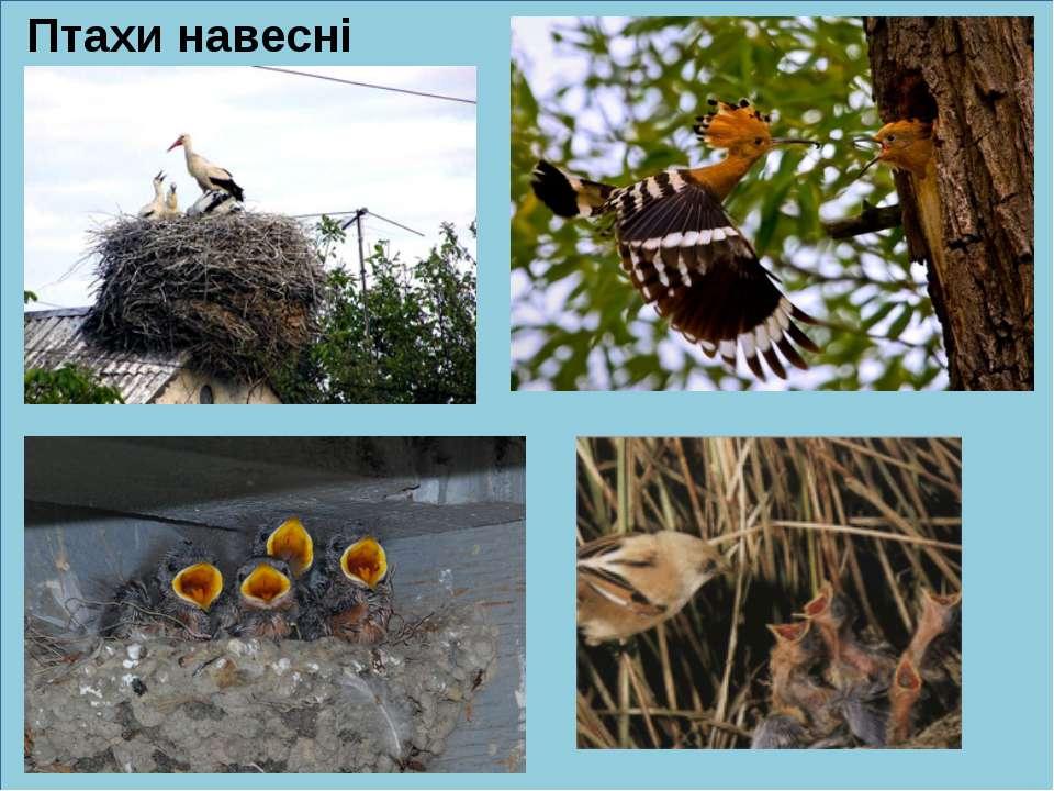 Птахи навесні