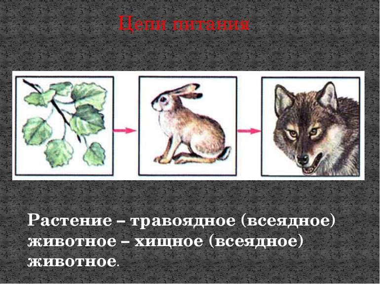 Цепи питания Растение – травоядное (всеядное) животное – хищное (всеядное) жи...