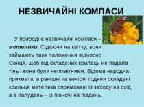 НЕЗВИЧАЙНІ КОМПАСИ У природі є незвичайні компаси – метелики. Сідаючи на квіт...