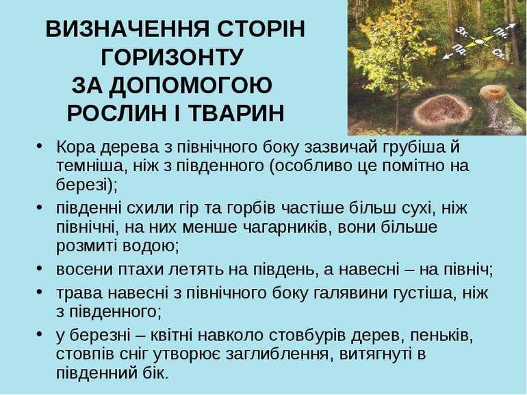 ВИЗНАЧЕННЯ СТОРІН ГОРИЗОНТУ ЗА ДОПОМОГОЮ РОСЛИН І ТВАРИН Кора дерева з північ...
