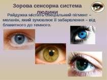 Зорова сенсорна система людини Райдужка містить спеціальний пігмент – меланін...