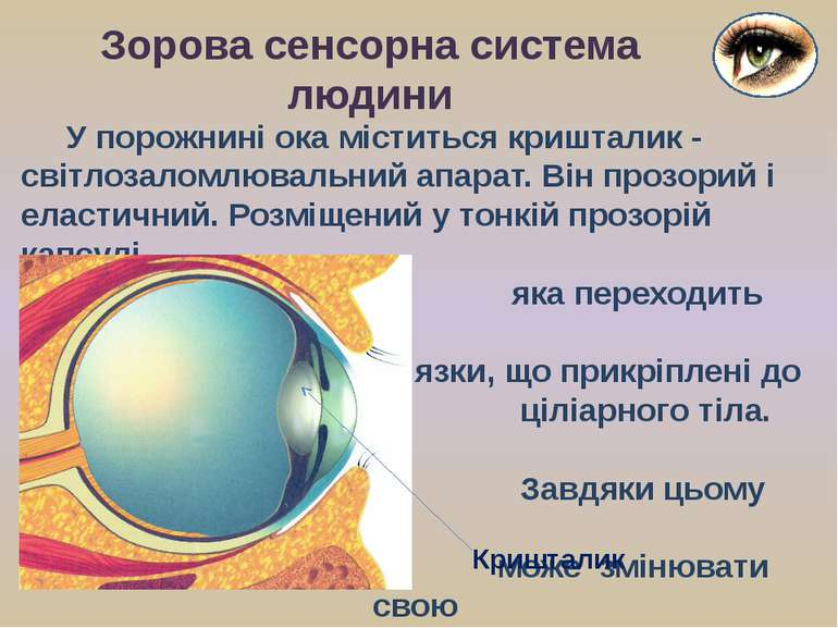 У порожнині ока міститься кришталик - світлозаломлювальний апарат. Він прозор...