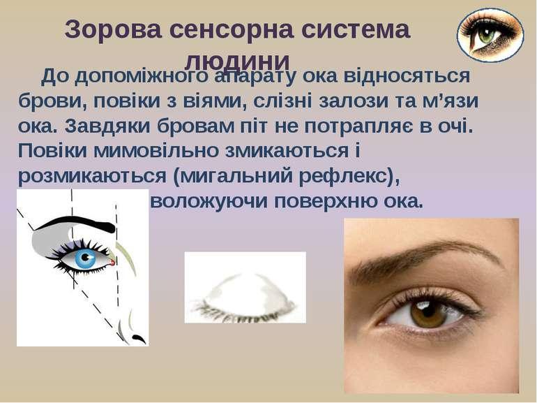 До допоміжного апарату ока відносяться брови, повіки з віями, слізні залози т...