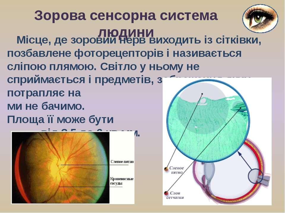 Місце, де зоровий нерв виходить із сітківки, позбавлене фоторецепторів і нази...