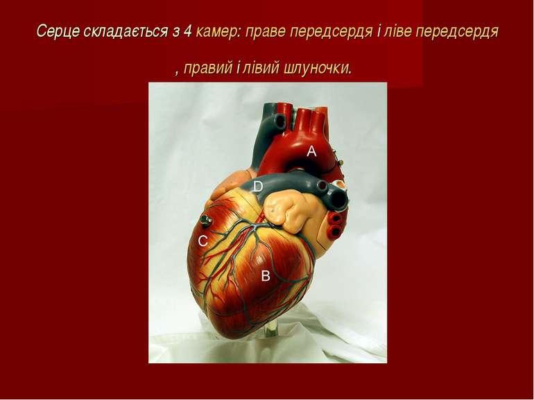 Серце складається з 4камер:праве передсердяіліве передсердя,правийілів...
