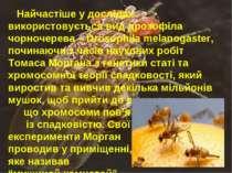 Найчастіше у дослідах використовується вид дрозофіла чорночерева – Drosophila...