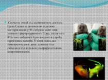 Спочатку вчені під керівництвом доктора Еріка Сасакі за допомогою вірусних ве...
