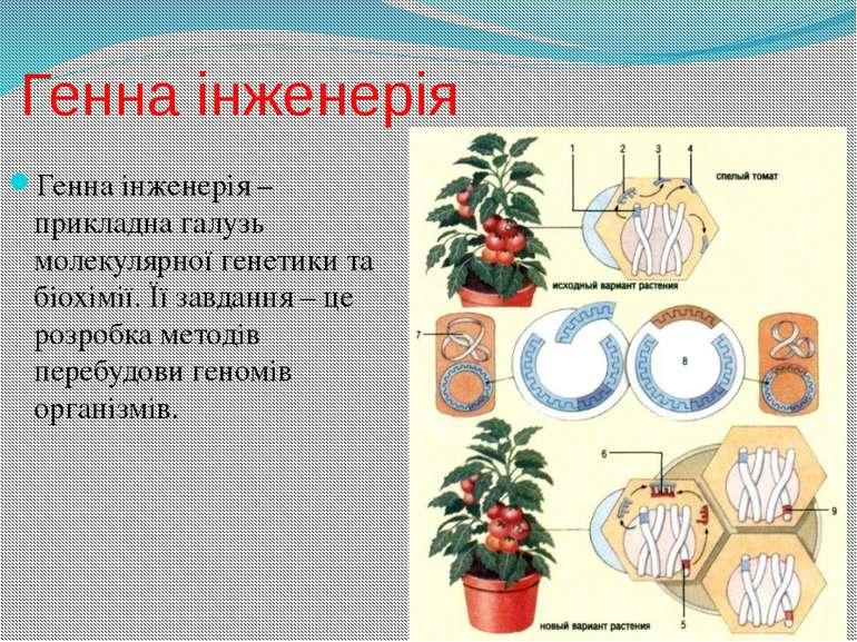 Генна інженерія Генна інженерія – прикладна галузь молекулярної генетики та б...