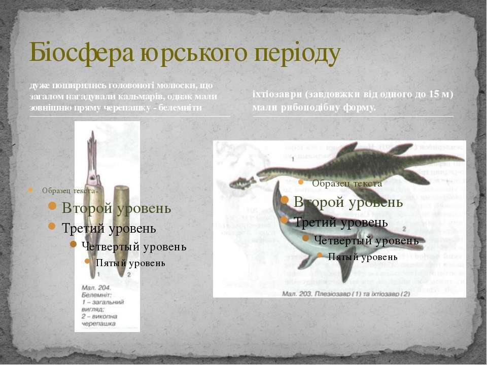 дуже поширились головоногі молюски, що загалом нагадували кальмарів, однак ма...
