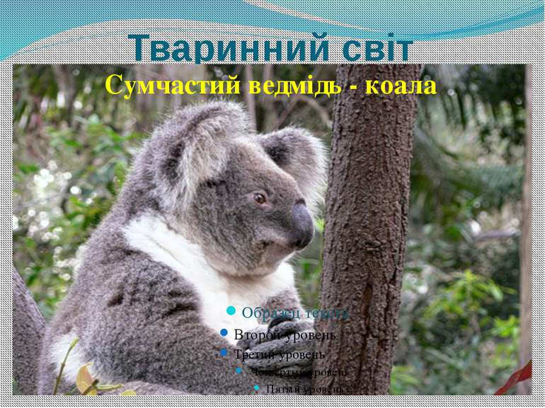 Тваринний світ Сумчастий ведмідь - коала