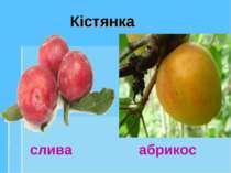 Кістянка слива абрикос