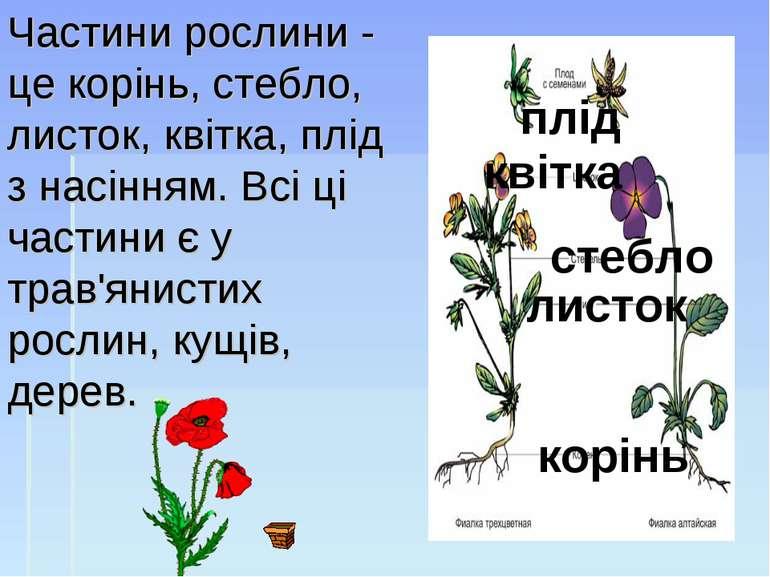 Частини рослини - це корінь, стебло, листок, квітка, плід з насінням.Всі ці ...