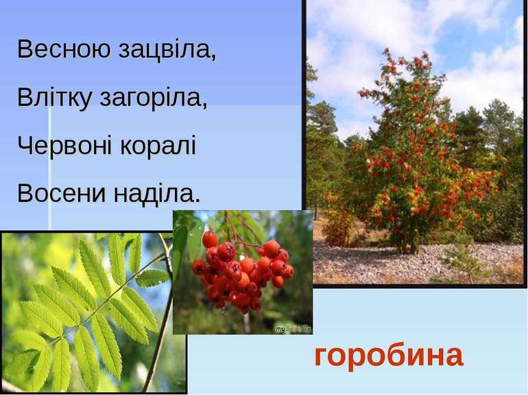 горобина Весною зацвіла, Влітку загоріла, Червоні коралі Восени наділа.