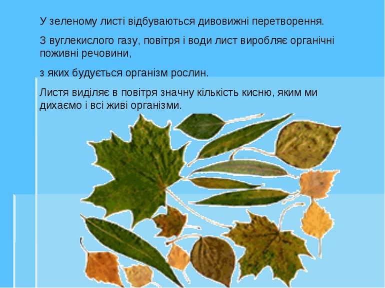 У зеленому листі відбуваються дивовижні перетворення. З вуглекислого газу, п...