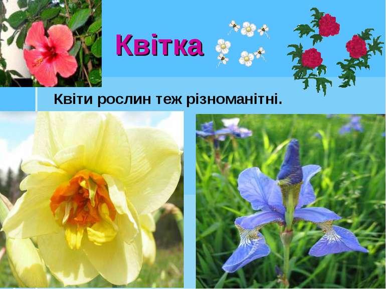 Квітка Квіти рослин теж різноманітні.
