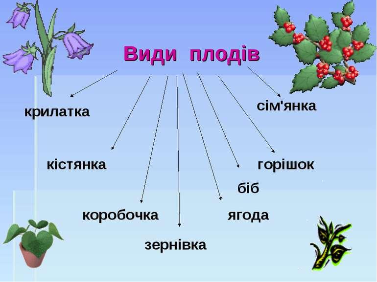 Види плодів кістянка коробочка ягода горішок крилатка зернівка біб сім'янка