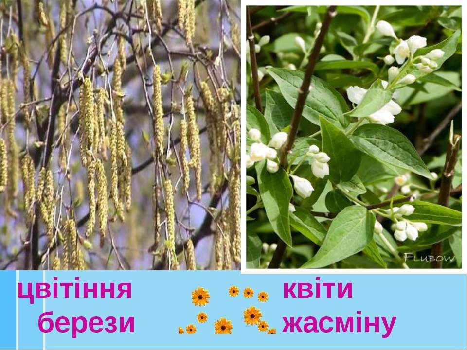цвітіння берези квіти жасміну