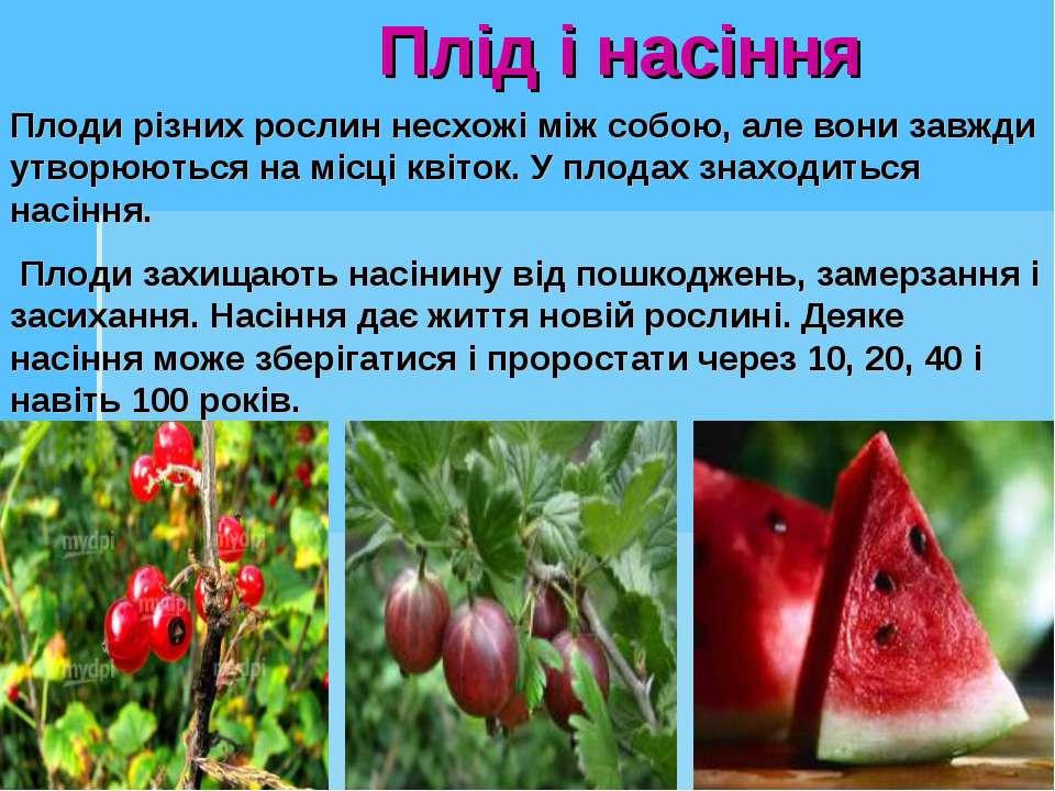 Плід і насіння Плоди різних рослин несхожі між собою, але вони завжди утворюю...