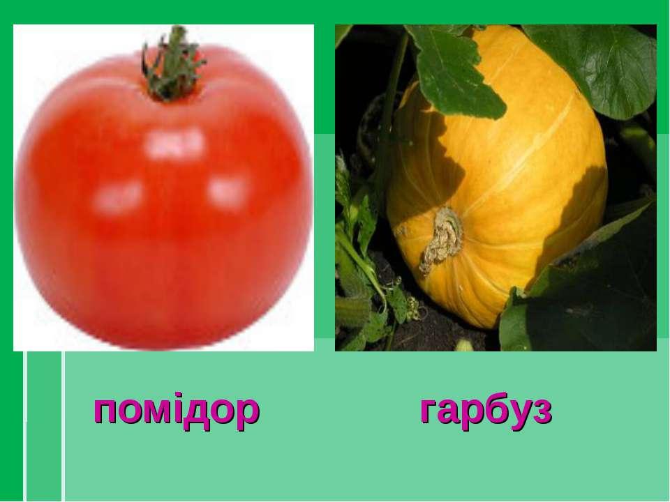 помідор гарбуз