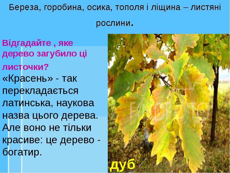 дуб Відгадайте , яке дерево загубило ці листочки? Береза, горобина, осика, то...