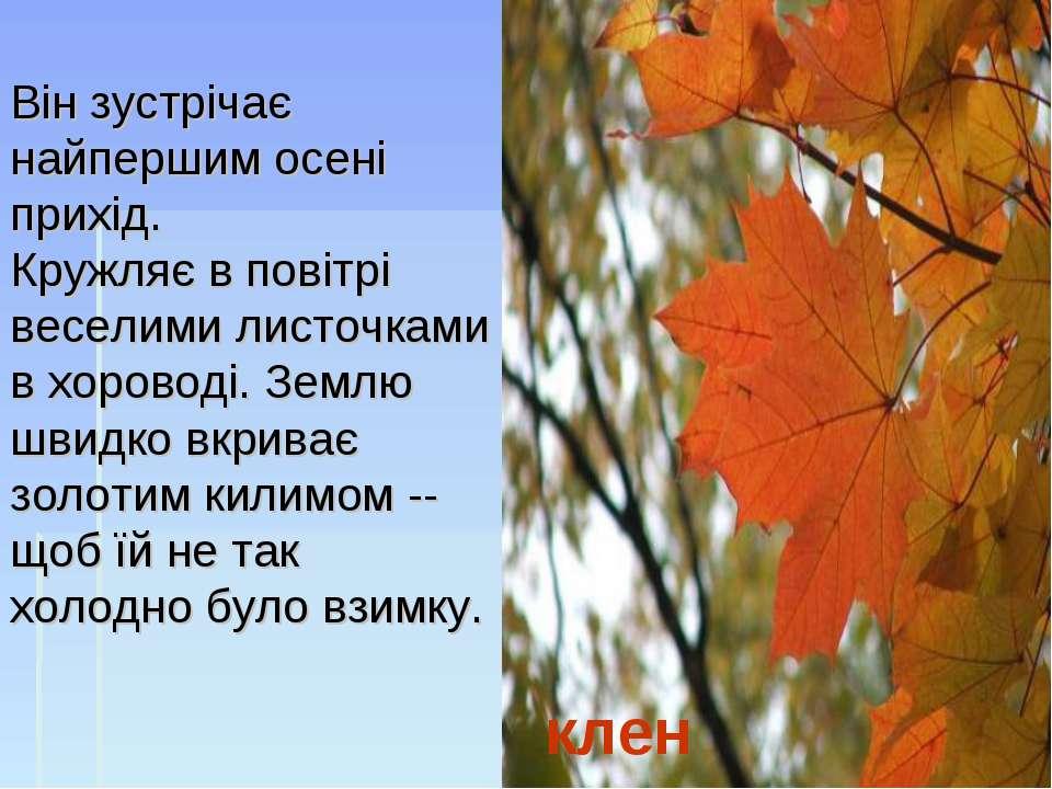 клен Він зустрічає найпершим осені прихід. Кружляє в повітрі веселими листочк...