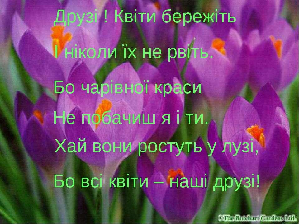 Друзі ! Квіти бережіть І ніколи їх не рвіть. Бо чарівної краси Не побачиш я і...