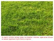 Не варто топтати зелену траву на клумбах і газонах, адже вона більше не зможе...