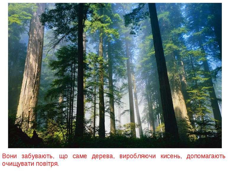 Вони забувають, що саме дерева, виробляючи кисень, допомагають очищувати пові...