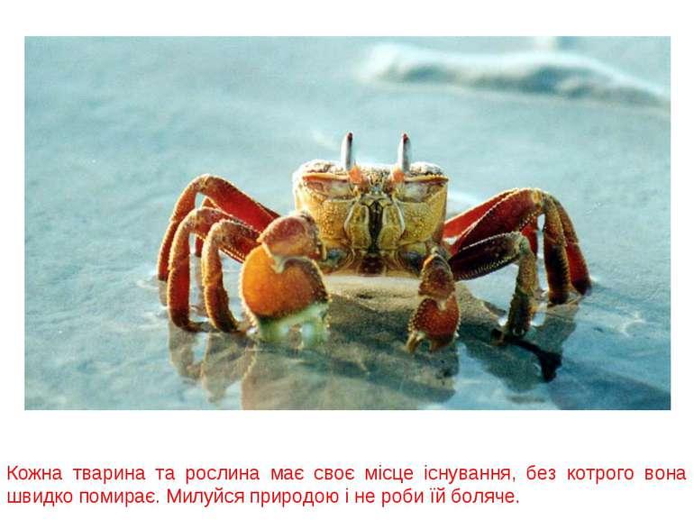 Кожна тварина та рослина має своє місце існування, без котрого вона швидко по...