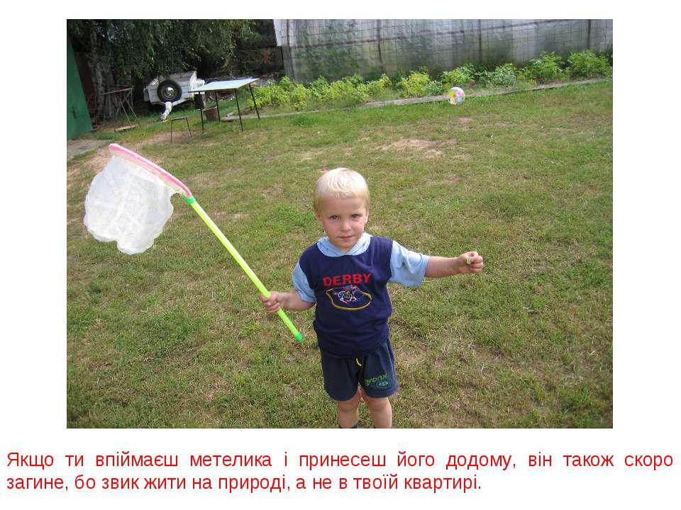 Якщо ти впіймаєш метелика і принесеш його додому, він також скоро загине, бо ...