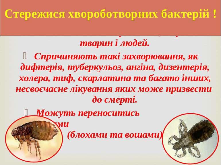 Вони поселяються на рослинах, в організмі тварин і людей. Спричиняють такі за...