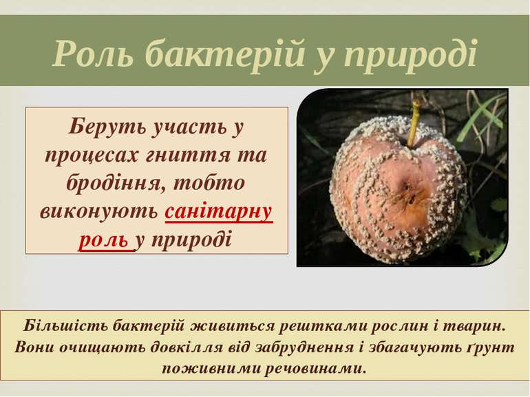 Роль бактерій у природі Беруть участь у процесах гниття та бродіння, тобто ви...