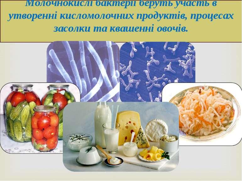 Молочнокислі бактерії беруть участь в утворенні кисломолочних продуктів, проц...