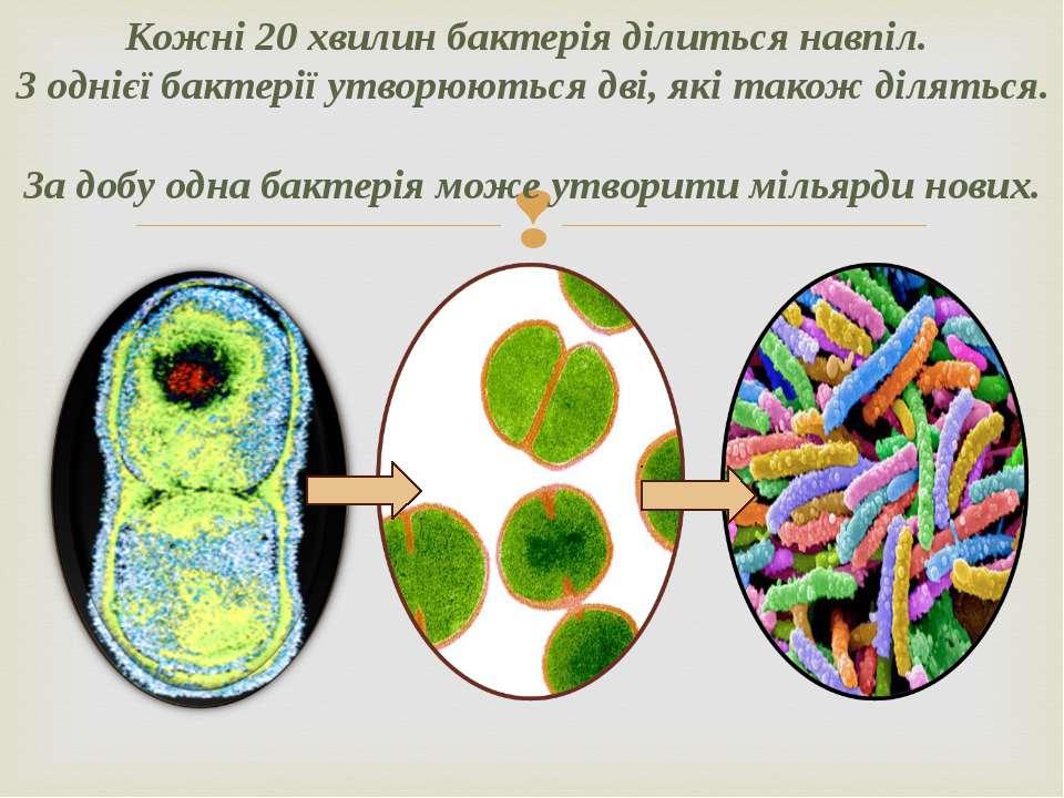 Кожні 20 хвилин бактерія ділиться навпіл. З однієї бактерії утворюються дві, ...