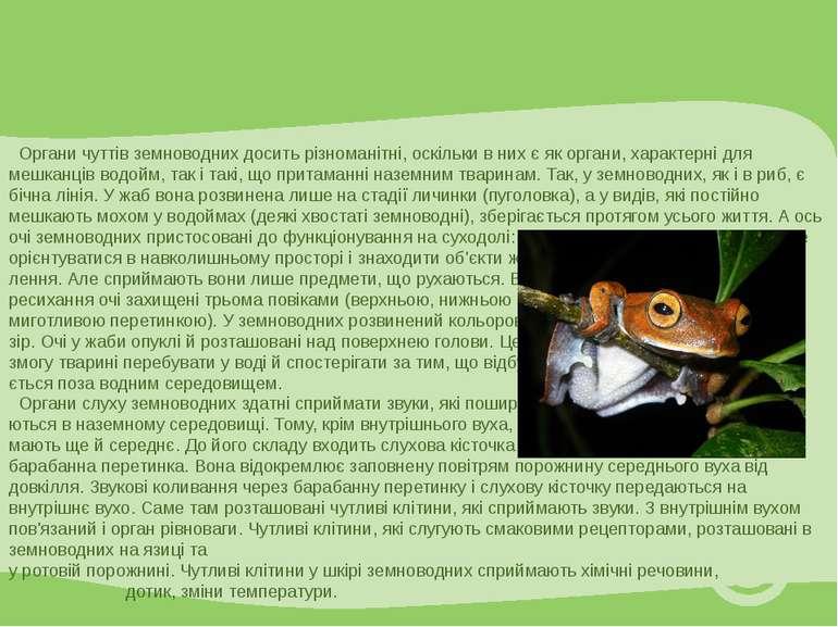Органи чуттів земноводних досить різноманітні, оскільки в них є як органи, ха...