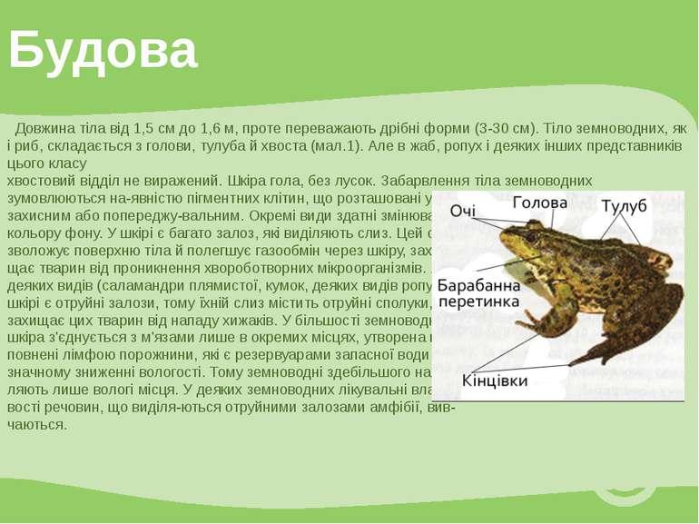 Довжина тіла від 1,5 см до 1,6 м, проте переважають дрібні форми (3-30 см). Т...