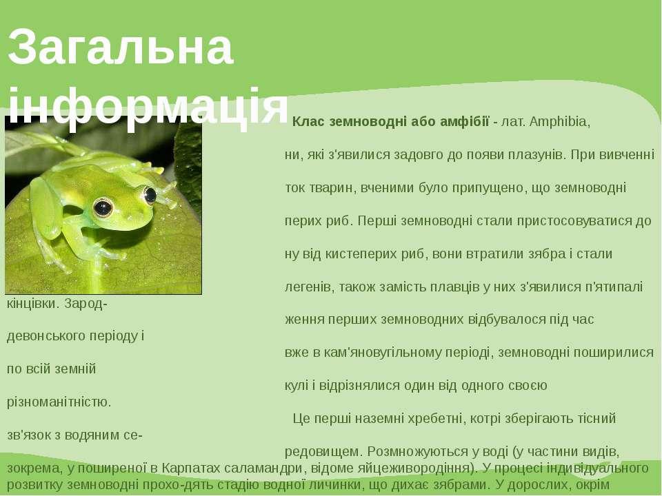 Клас земноводні або амфібії - лат. Amphibia, стародавні хребетні твари ни, як...