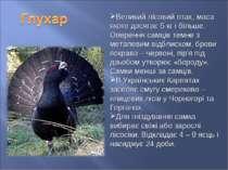 Великий лісовий птах, маса якого досягає 5 кг і більше. Оперення самців темне...