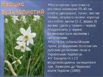 Багаторічна трав`яниста рослина заввишки 20-40 см; стебло двогранне, тонке; л...