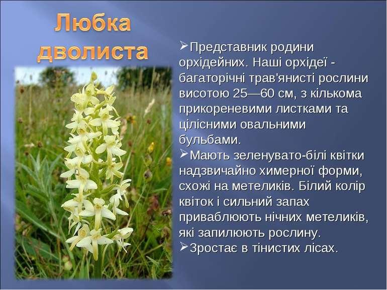 Представник родини орхідейних. Наші орхідеї - багаторічні трав'янисті рослини...