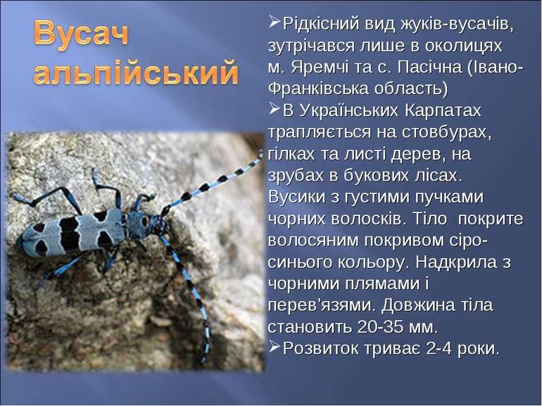 Рідкісний вид жуків-вусачів, зутрічався лише в околицях м. Яремчі та с. Пасіч...