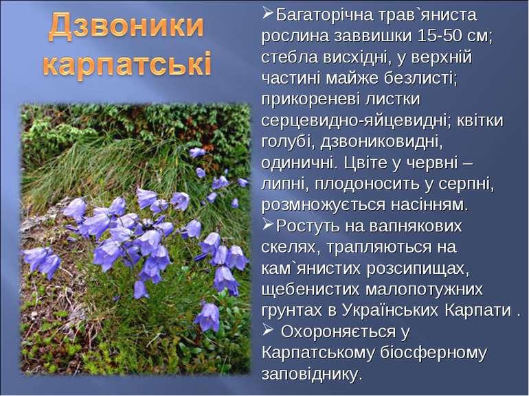 Багаторічна трав`яниста рослина заввишки 15-50 см; стебла висхідні, у верхній...