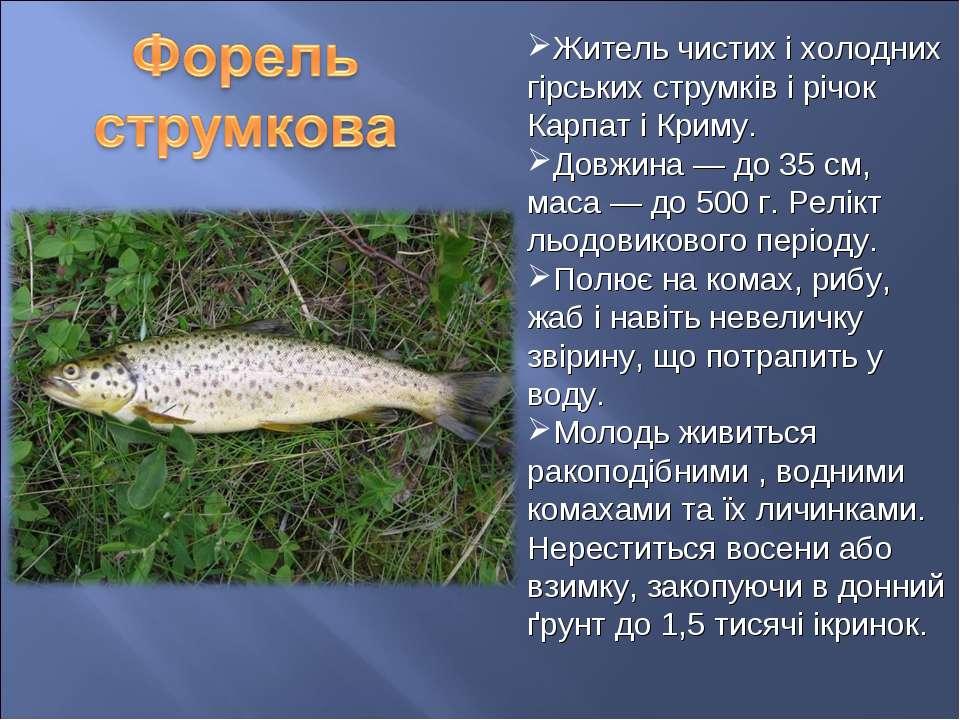 Житель чистих і холодних гірських струмків і річок Карпат і Криму. Довжина — ...