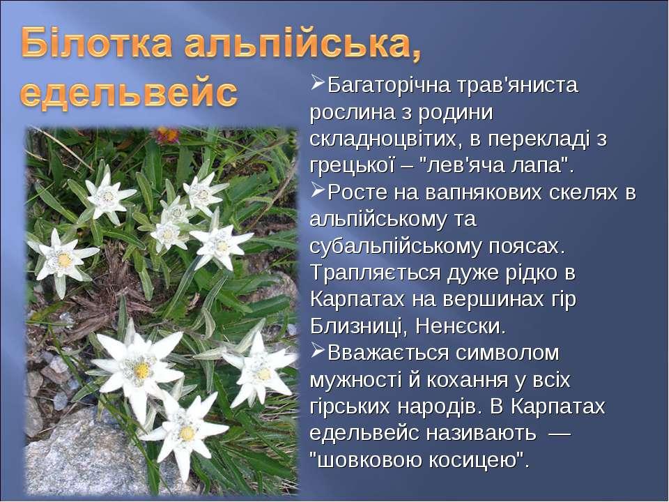 Багаторічна трав'яниста рослина з родини складноцвітих, в перекладі з грецько...