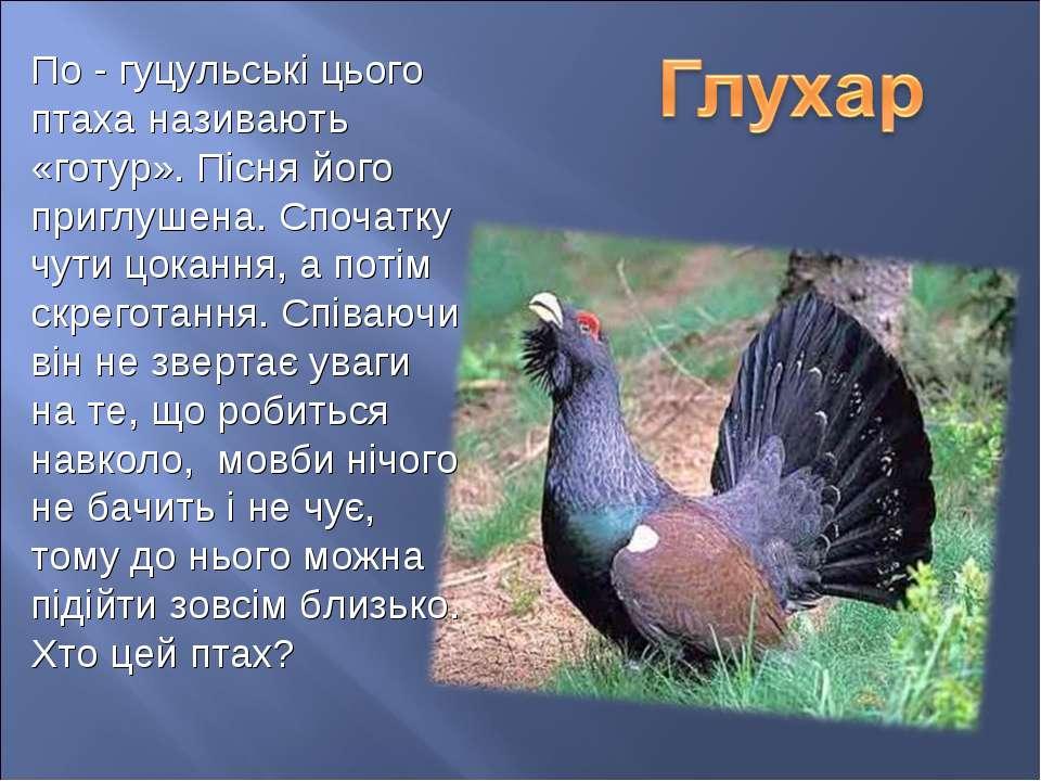 По - гуцульські цього птаха називають «готур». Пісня його приглушена. Спочатк...