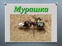 Мурашка Серед лісу горбик – дім, Тисячі живуть у нім. Працелюбні ці комахи, Д...