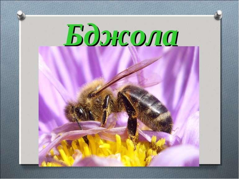 Бджола Ця маленька трудівниця, Мед збирає, як годиться, Все у вулик, все у со...