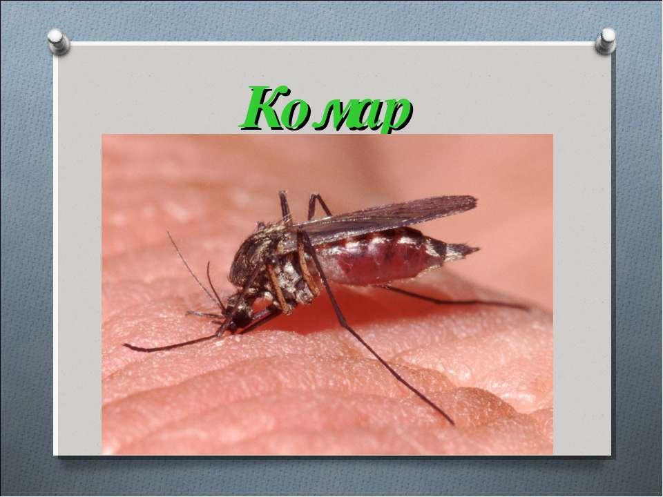 Комар Ні рак, ні риба, Ні звір, ні птиця, Голос тоненький, А ніс довгенький: ...
