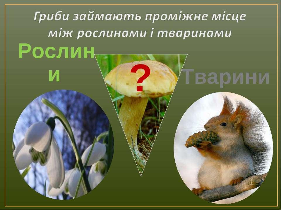 Рослини Тварини ?